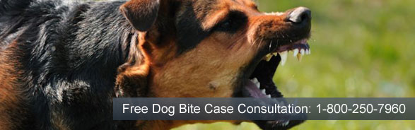 dog-bite-lawyer-contact